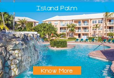 Island-Palm-display