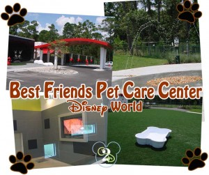 pet care disney