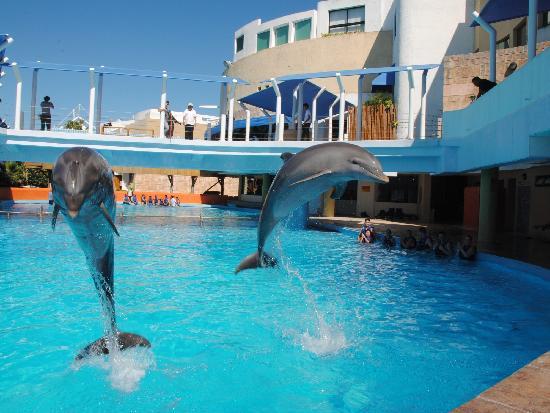 acuario cancun